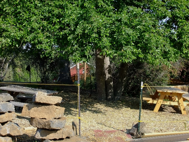 The outdoor \'conference room\' under the old apple tree