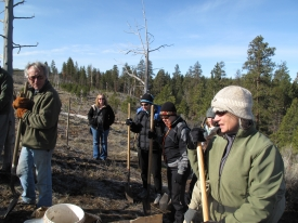 Tree Planting for the Ponderosa