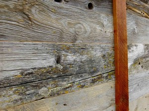 The lichen on the weathered, barn boards may continue to live and grow bringing beauty and nature.