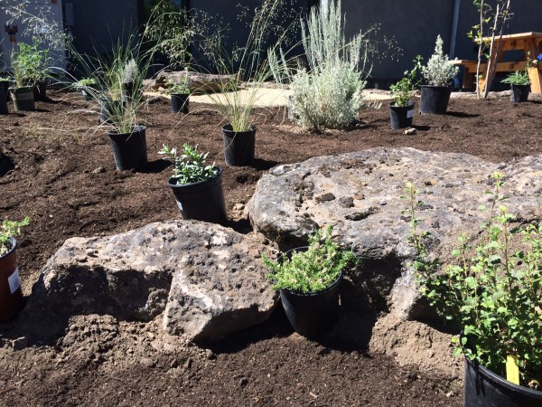 """Planting shrubs near rocks helps create """"resource islands"""" - areas that will support plant-life with very little water or resources."""